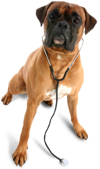 Home Veterinarian In Grand Forks Nd All Pets Hospital